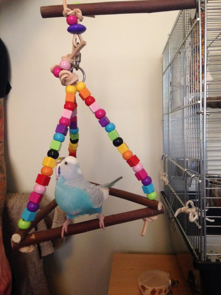 perch swing mini pyramid-lyra
