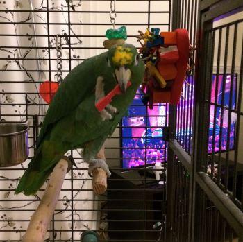 cage mounted shredding toys-peepo
