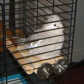 platform perches for small birds-sammi