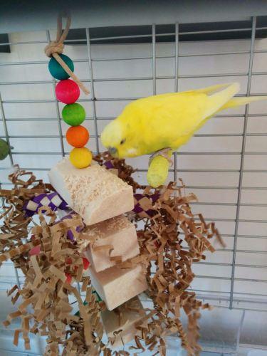 balsa toys for small birds-oscar