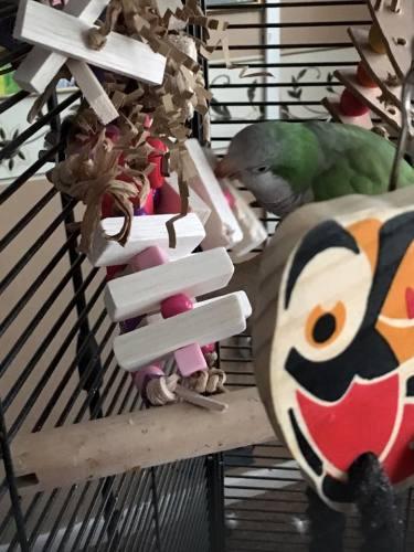 shredding parrot toy munchkin -gordon bennet