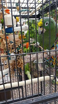 parrot toys to keep beaks active uk