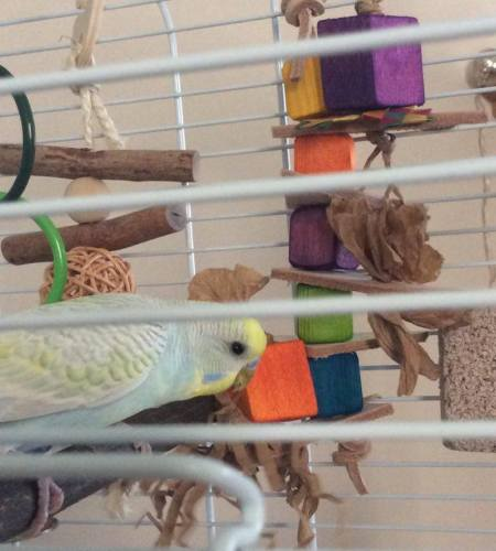shred and refill budgie toys-nimbie