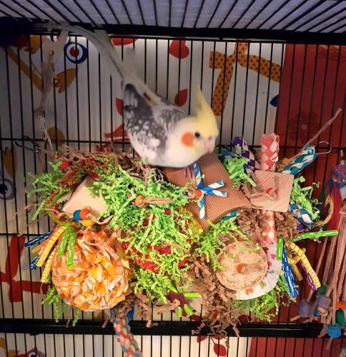 seagrass play mat for parrots - hugo