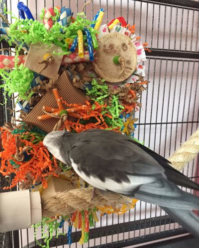 seagrass play mats for cockatiels-stanley