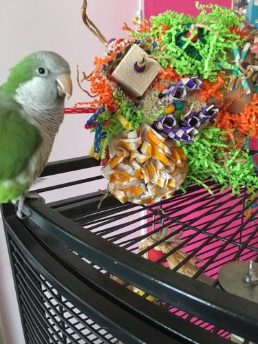 seagrass activity mats for parrots-gb