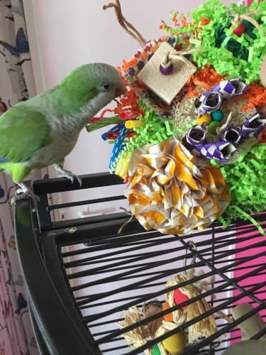 shredding mats for parrots-gordon bennett