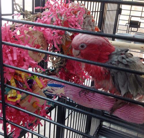 activity mats for parrots-kiwi