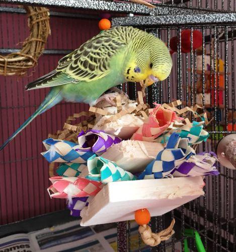 balsa shredding toy-harry