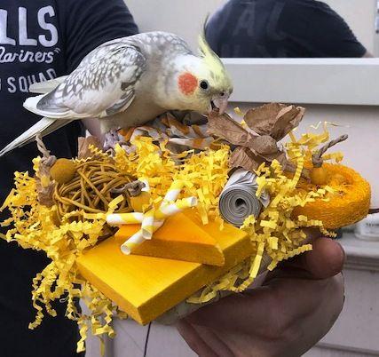 Shredding mats for parrots-Pickles