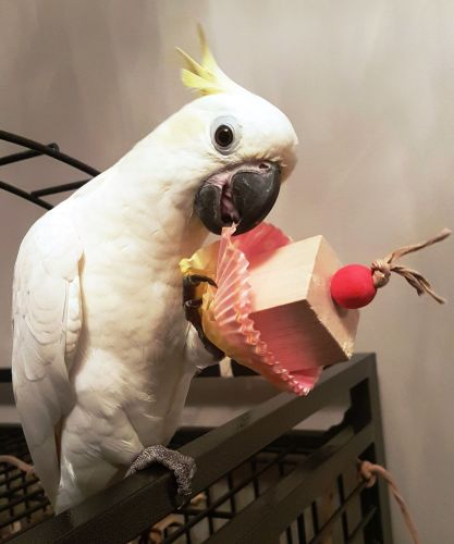 Parrot foot toys-Polly Too