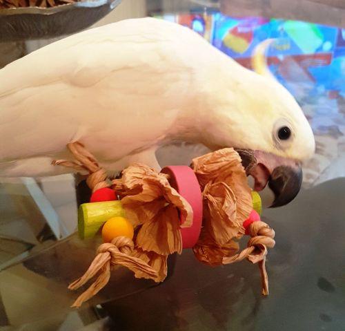 Foot toys for shredding fun-Polly