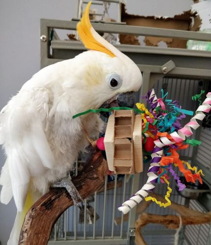 Parrot shredding foot toys-Jaffas party straws-11-1-19