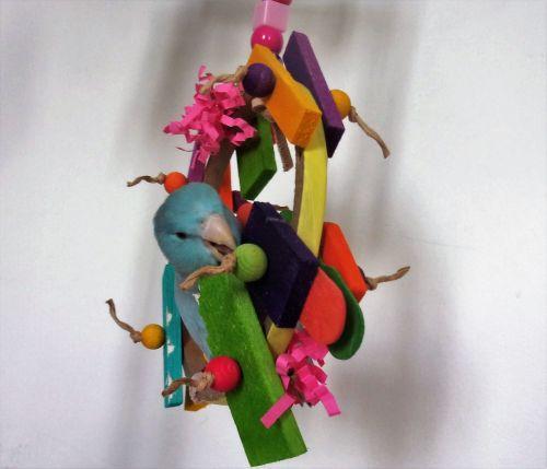Budgie shredding swing-Daisy Boo-Bella 23-5-19