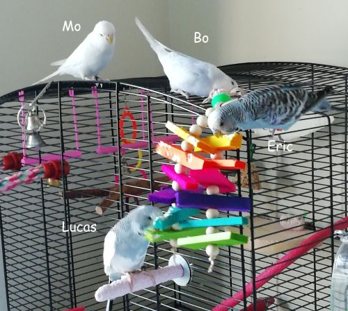Balsa shredding toy-Mo-Bo-Eric-Lucas