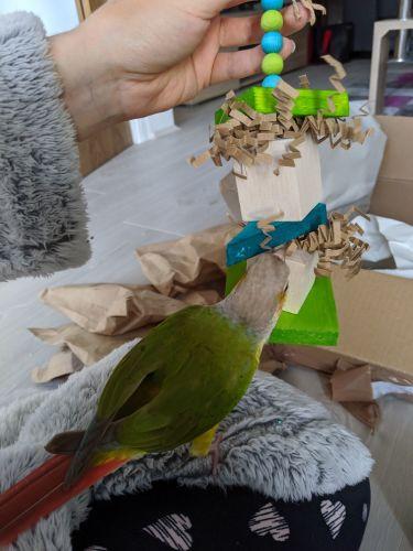 Balsa toys for birds- Sonny 26-10-19