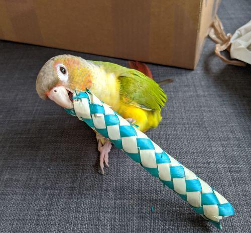Balsa foot toys-Sonny 16-11-19