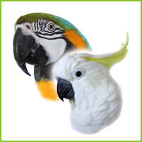 Extra Large Full Length Perches by Cage