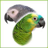 Large Full Length Perches by Cage