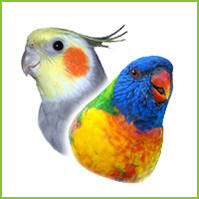 Small Full Length Parrot Perches by Cage