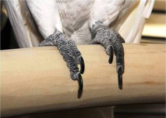 Alba's feet on the birch perch we hand crafted for her