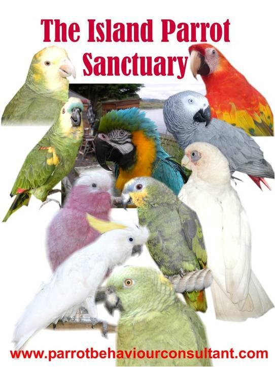 The Island Parrot Sanctuary