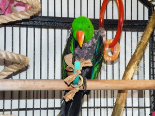 Meeko enjoying pipe and bangle foot toy