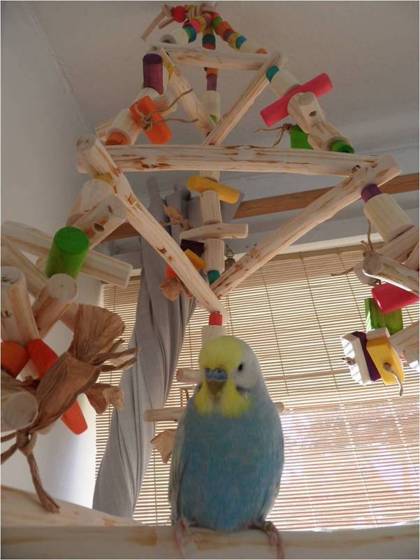 Parrot swing that can be filled with Elfs favourite shredding toys