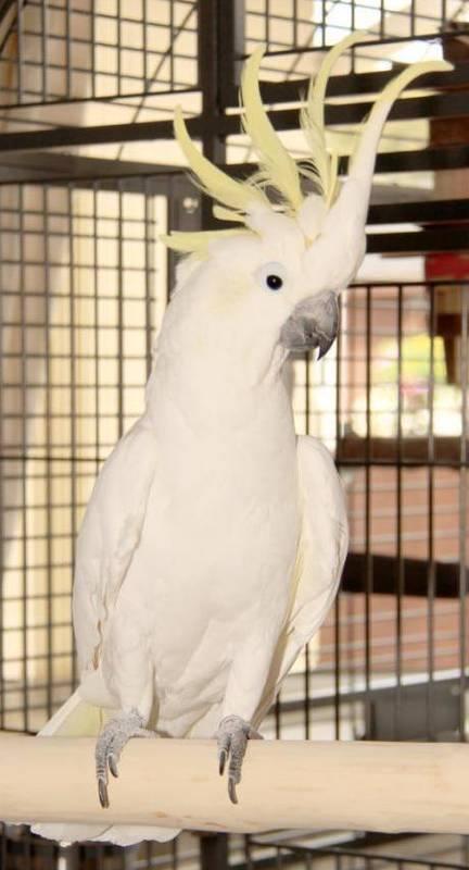 Cockatoo Perches UK made to measure