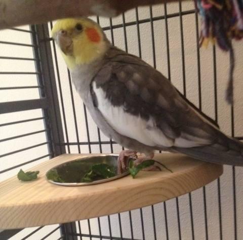 Edmund on his corner feeder