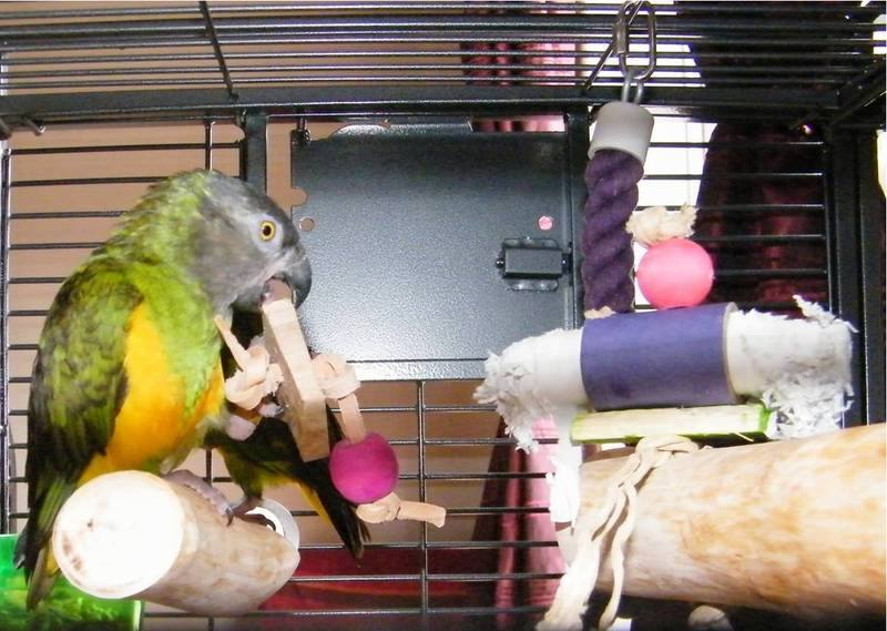 Senegal perches made to any size
