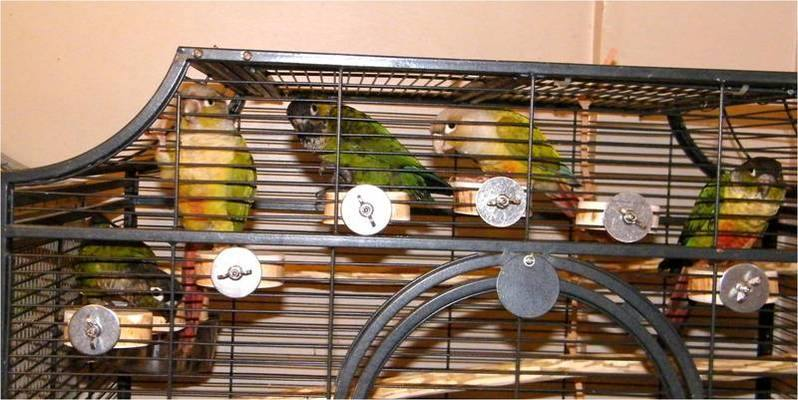 Conure perches
