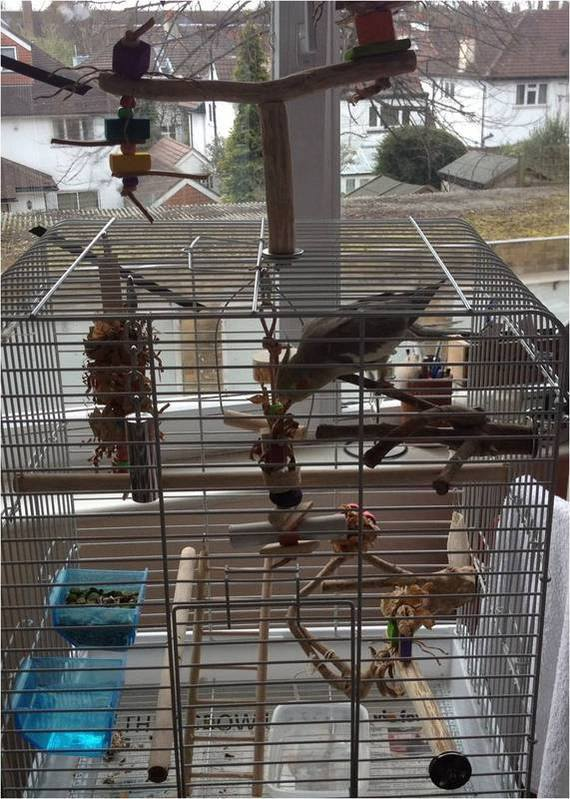 Cockatiel toys and perches uk
