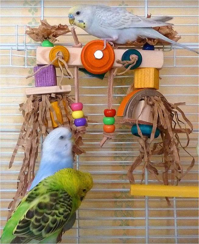 budgie toy with perch