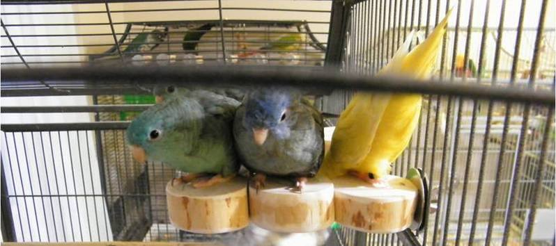Flat perches for Linnies