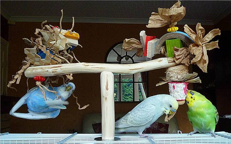 Budgie perches with toys