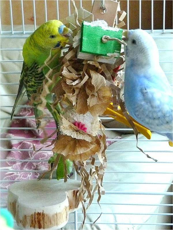 Budgie perches giving access to toys
