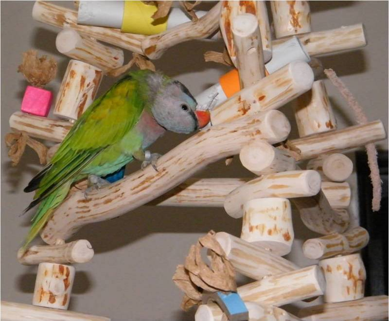large parrot swing full of shredding toys
