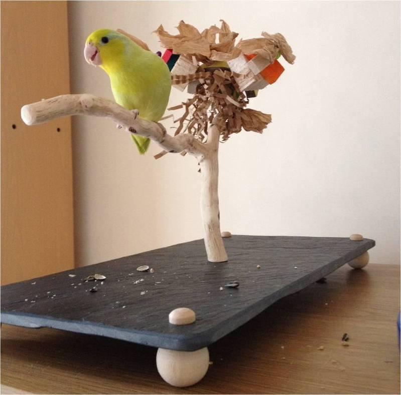 Love Bird Table Top Perch