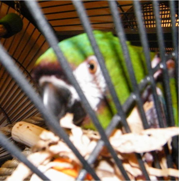 Cage mounted toys for birds