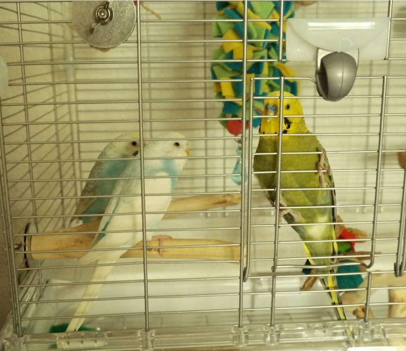 Budgie perches to share