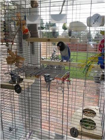 Lovebird perches and feeding platforms