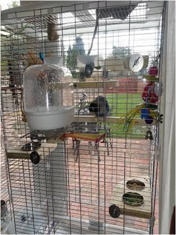Lovebird cage set up with flat perches and feeding platforms