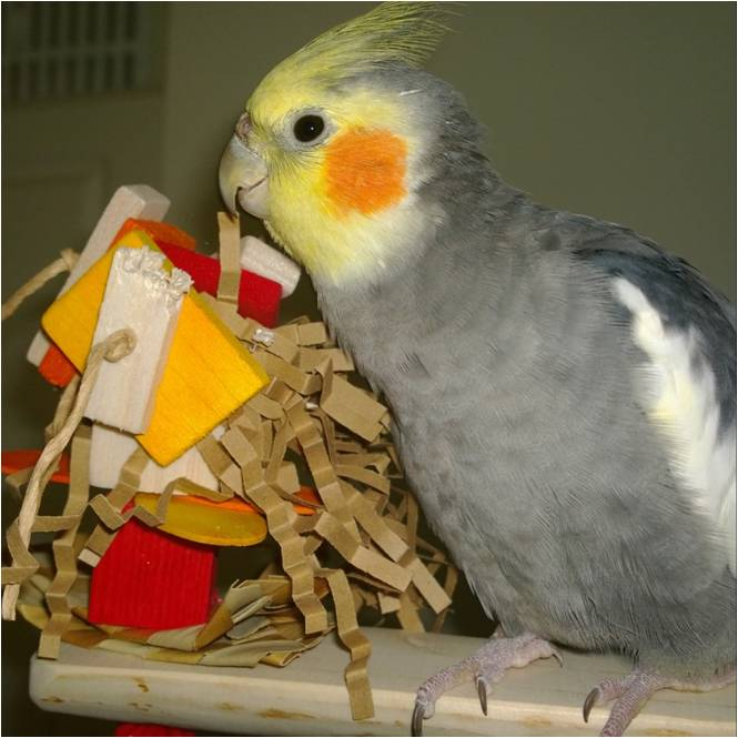 Shredding toy perches for cockatiels