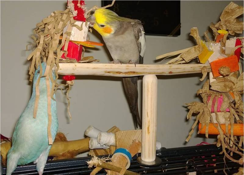 Flat perches for disabled parrots
