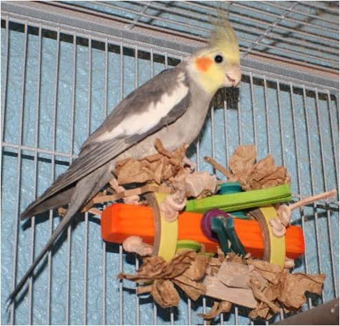 Bird toys for cockatiels