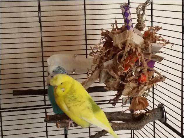 Budgie shredding toys UK