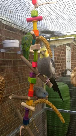 Bird Swings to suit any parrot UK