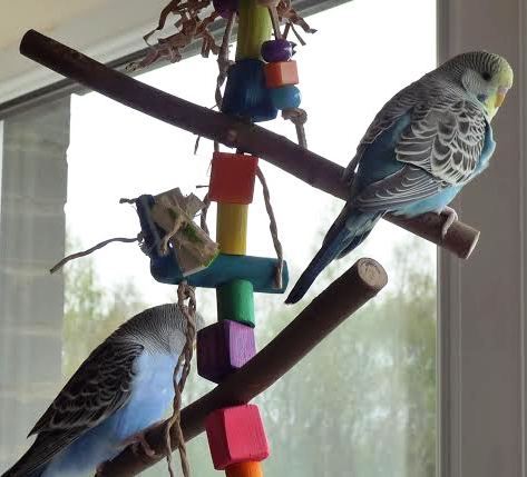 Budgie swings uk made to any size