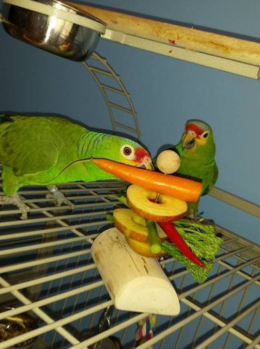Tempt your Parrot to eat fresh foods